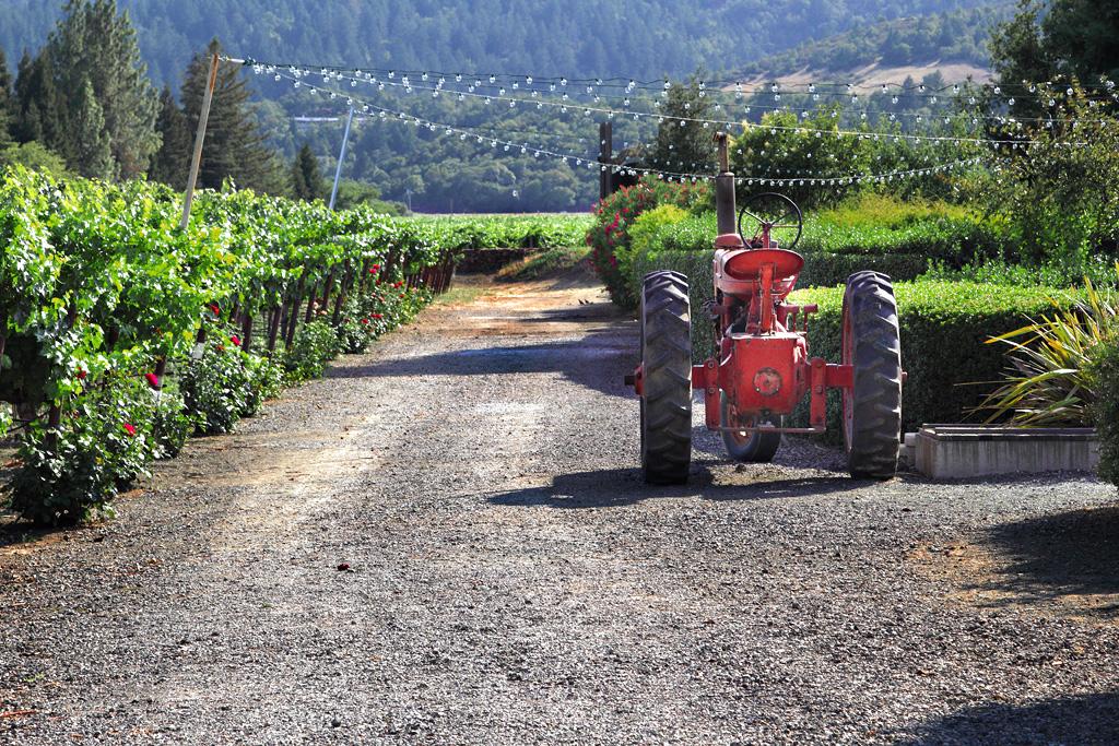 IMAGE: http://digitol.free.fr/images/vignes.jpg